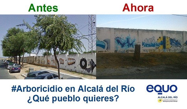 Antes y ahora del arboricidio en Alcalá del Río