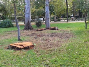 Árboles centenarios talados en el Parque de María Luisa de Sevilla