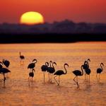 El Parlamento Europeo pide salvar Doñana