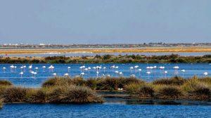 La declaración de sobrexplotación del acuífero de Doñana llega tarde