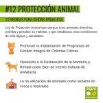 Impulsaremos una Ley de protección animal que garantice sus derechos y acabe con el maltrato