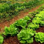 """Reprochamos al PP su """"hipocresía"""" pidiendo más fondos para agricultura ecológica"""