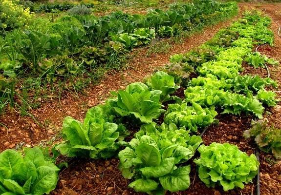 """EQUO reprocha al PP su """"hipocresía"""" pidiendo más fondos para agricultura ecológica"""
