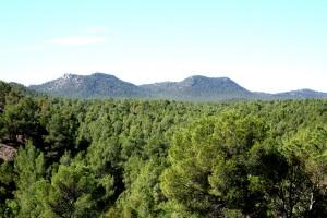 Bosques Andalucía. Zonas Forestales andaluzas