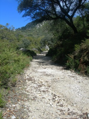 Zonas forestales de andalucía. Bosques andaluces.