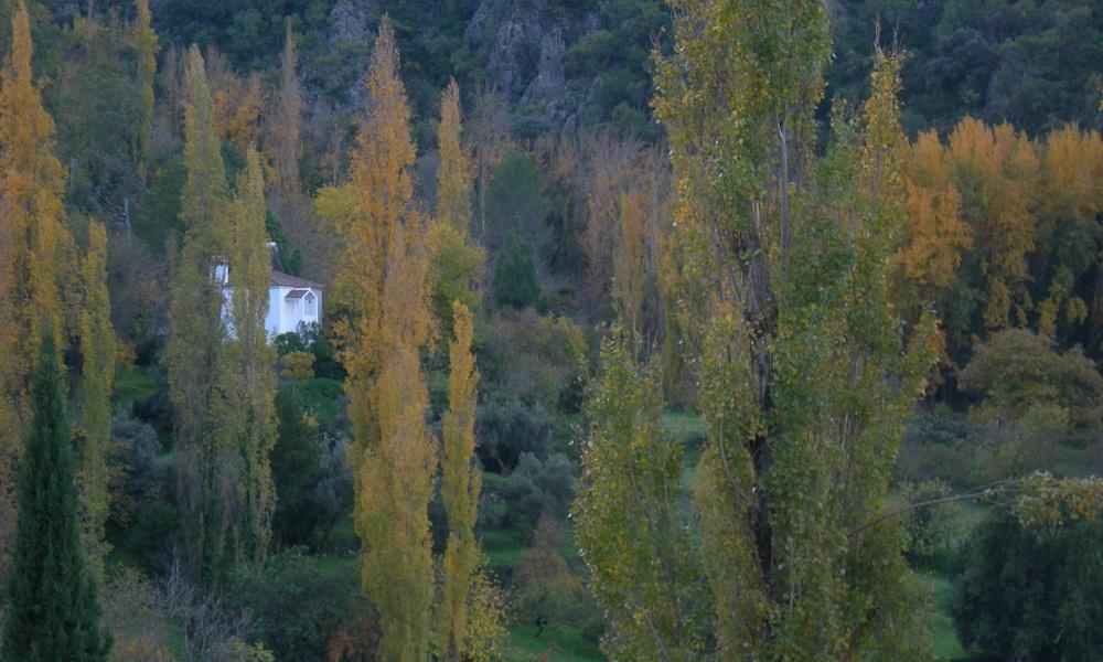 Bosques de Andalucía. zonas forestales
