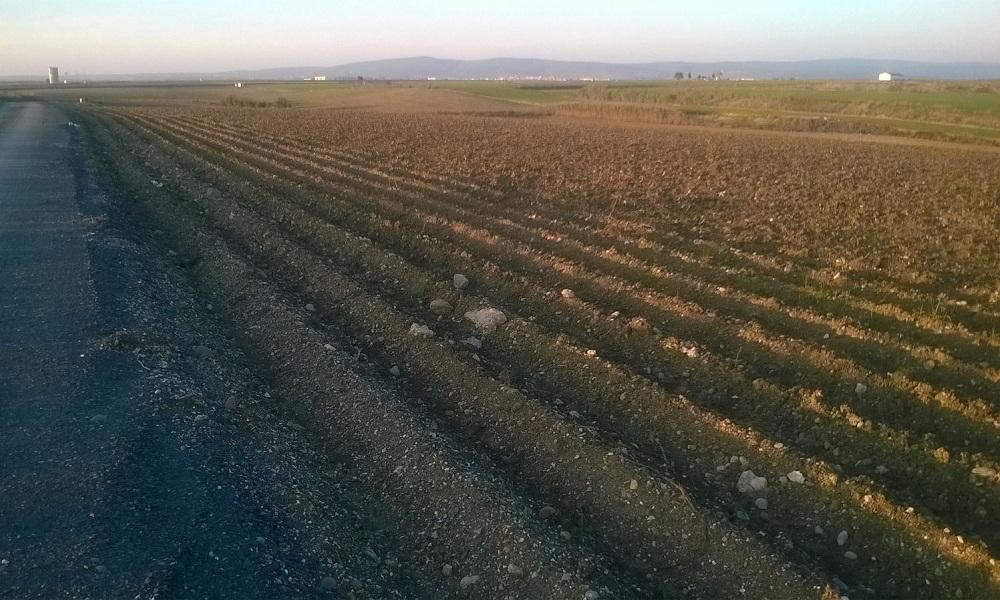 Foto de un campo andaluz