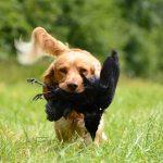El nuevo reglamento para la caza flexibiliza las autorizaciones sin contemplar unas mínimas garantías