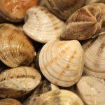 Insistimos a la Junta en que aplique medidas de sostenibilidad para las pesquerías