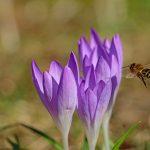 Reprochamos al Gobierno su falta de ambición en el plan para garantizar la biodiversidad de los insectos