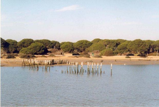 Vista de Doñana.