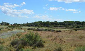 Salvar Doñana