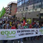 """Esperamos que un apoyo masivo a la manifestación por el lobo de este domingo """"haga también a la Junta abrir los ojos"""""""