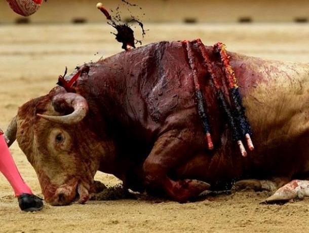 Maltrato animal en corridas de toros