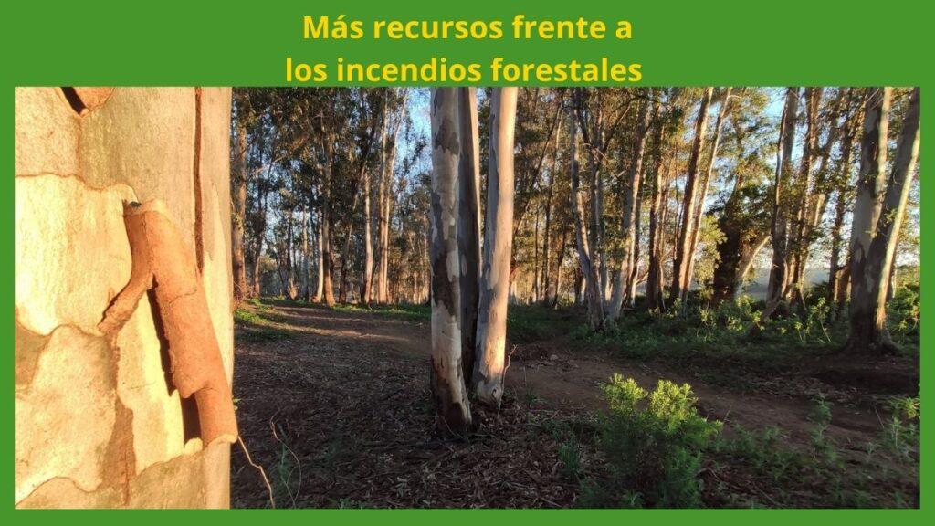Foto del monte en Andalucía