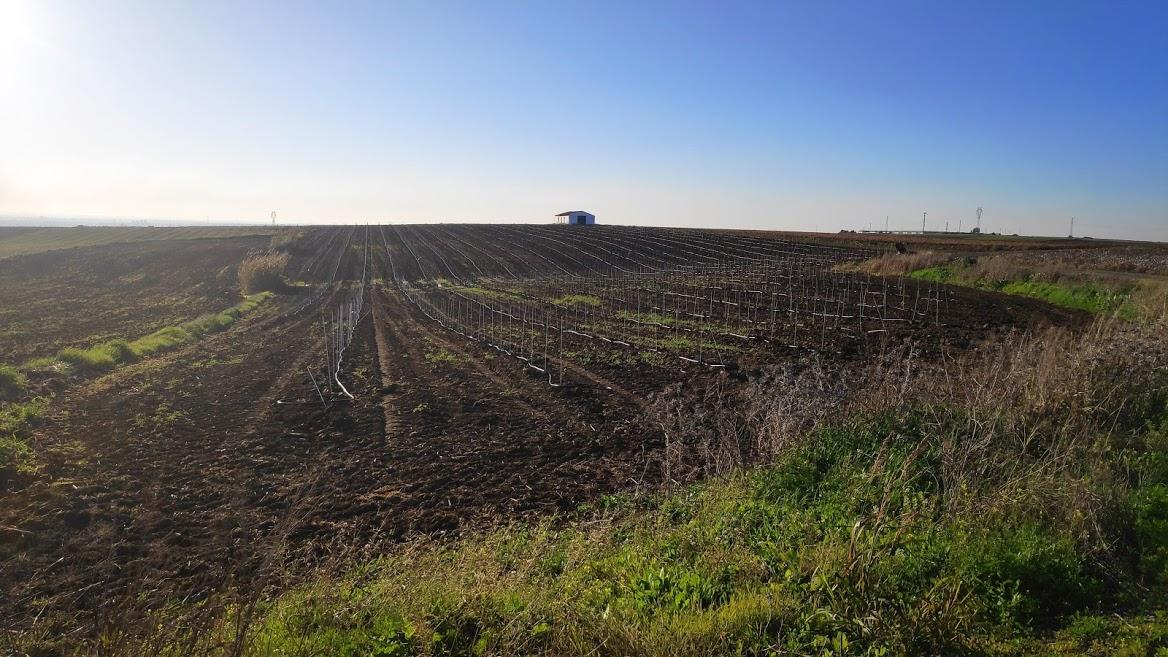 Campo andaluz vega del guadalquivir