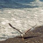 Es un grave error desinfectar las playas por el Covid19